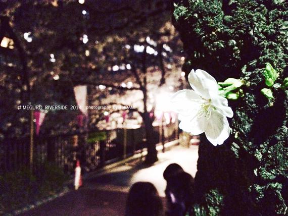sakura2014_02